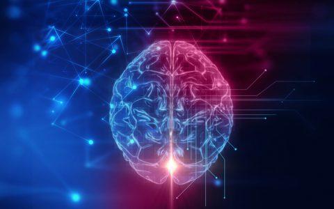 Las neurociencias en la gestión de personas