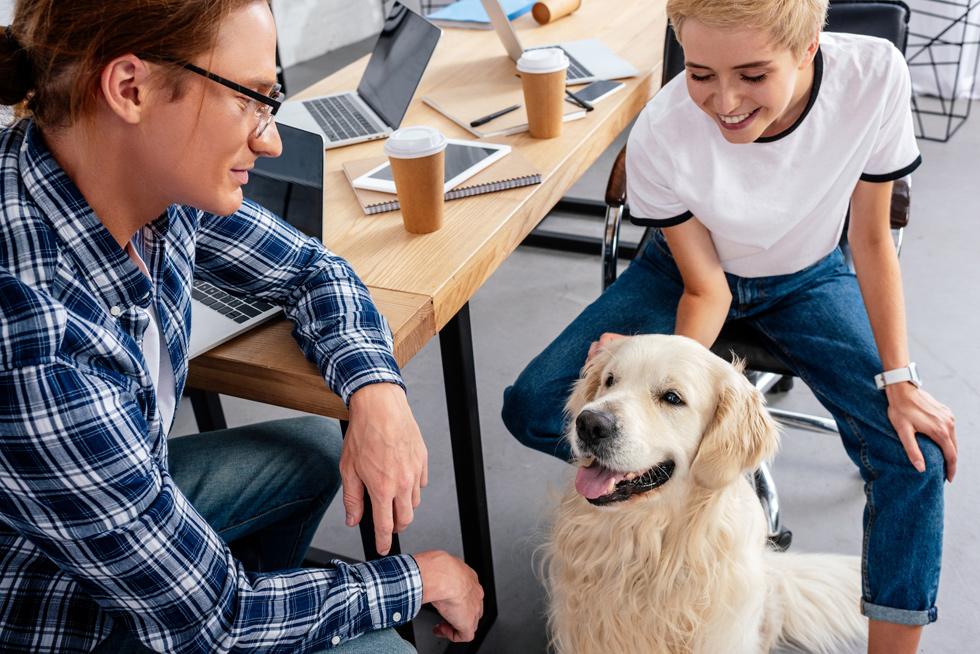 Beneficios de tener un perro en la oficina: ¿aumenta la productividad?