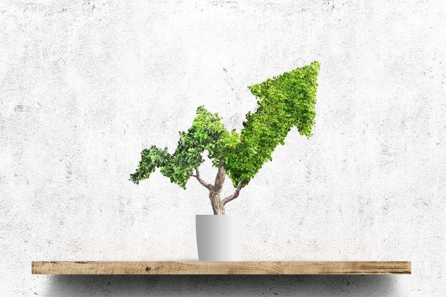 Cómo elaborar un plan de sostenibilidad para la empresa